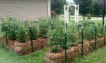 Straw-Bale-Garden