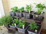 good-plants-for-an-herb-garden